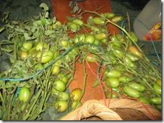 09-25-07 Fall Harvest in the mountains 009